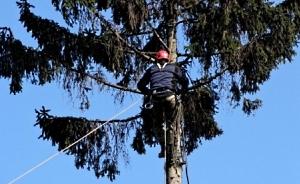 Обрезка  и удаление аварийных деревьев Винница